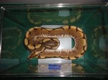 All God's Creatures Reptile Rescue | a 501(c)(3) Non-profit Company