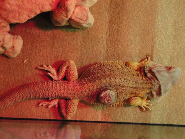 All God's Creatures Reptile Rescue   a 501(c)(3) Non-profit Company